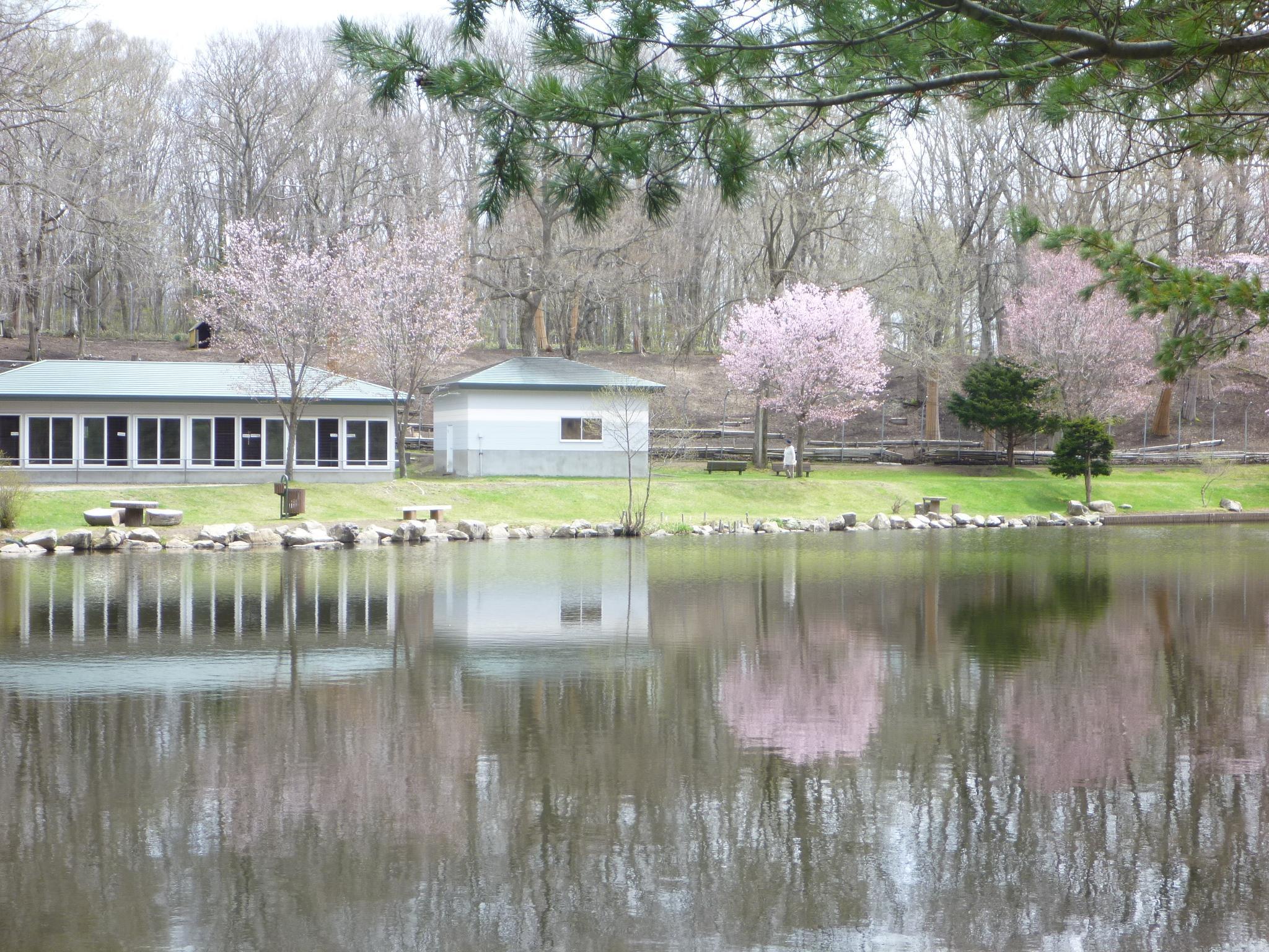 鹿公園 池2